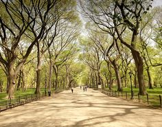 cool-places-world-perspective-Central-Park-trees ... take some time and enjoy a new perspective.