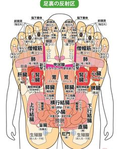 Modern Lunch Boxes, Cool Lunch Boxes, Plastic In The Sea, Foot Reflexology, Lymph Nodes, Acupressure Points, Insulated Lunch Bags, Medical Science, Good Job