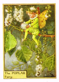 This beautiful Poplar Flower Fairy Vintage Print by Cicely Mary Barker was printed and is an original book plate from an early Flower Fairy book. Cicely Barker created 168 flower fairy illustrations in total for her many books. Cicely Mary Barker, Fairy Dust, Fairy Land, Fairy Tales, Vintage Fairies, Beautiful Fairies, Flower Fairies, Fantasy Illustration, Magical Creatures