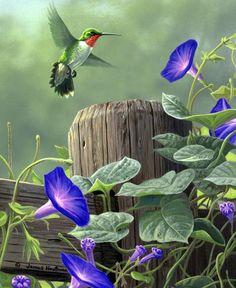 Wildlife art by Jim Hautman Pretty Birds, Beautiful Birds, Watercolor Bird, Watercolor Paintings, Gravure Photo, Morning Glory Flowers, Bird Drawings, Bird Pictures, Wildlife Art