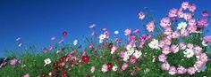 gooサンクスチーム @goo_thanks おはようです~とくちゃんです。 今日からはや10月ですね! (*>ω<*) 表紙をコスモスにしました~。 よーくみるとお花が「g」に模られてます♪ 今月もよろしくお願いいたします。 https://twitter.com/goo_thanks/status/517118181182164993