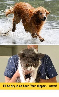 13Photos Proving That Cats and Dogs Are from Different Worlds