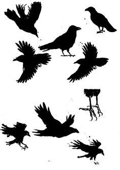 """Dessin d'étude """"Corbeaux"""" à l'encre de Chine pour CD Brieg Guerveno (Design Owen Poho) #blackcrow"""
