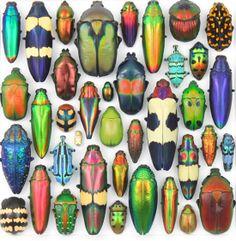 Creative Sketchbook: Christopher Marley Mesmerizing Metallic Bugs!