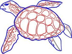 how to draw a sea turtle step 4