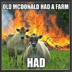 Evil Cows is the new best cow meme. These badasses are the Disaster Girl of the bovine world. Funny Shit, Funny Cute, Funny Memes, Funny Stuff, Funny Things, Random Things, Funny Pictures With Captions, Picture Captions, Funny Animal Pictures