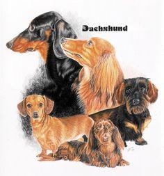 Doxen Dachshund Dog Cross Stitch Pattern
