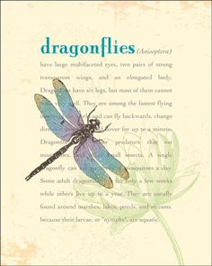 dragonfly sayings and quotes - Bing images Dragonfly Symbolism, Dragonfly Quotes, Dragonfly Art, Dragonfly Meaning, Dragonfly Tattoo Design, Dragonfly Necklace, All Nature, Animal Totems, Spirit Guides
