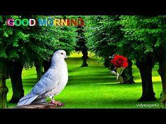 Good Morning Gif Funny, Nice Good Morning Images, Good Morning Video Songs, Good Morning Inspiration, Good Morning Images Download, Good Night Gif, Morning Pictures, Good Morning Messages Friends, Good Morning God Quotes