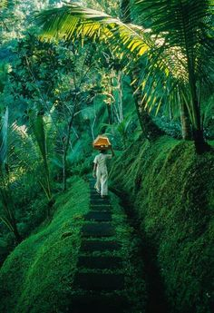 Forest journey. Bali #BeautifulPictures #AmazingPhotos