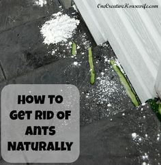 The Mommy Club- #1 How to get rid of ants naturally