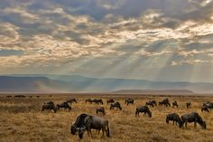 Explore the famous Ngorongoro Crater after your GCN experience in Tanzania!