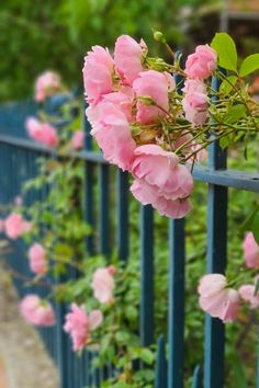 Easy, resilient flowers that will thrive in all kinds of weather #middlesizedgarden Claire Austin, Hydrangea Quercifolia, The Clumps, Rose Varieties, Heat Waves, Invasive Plants, Cottage Garden Plants, Colorful Garden, Planting Flowers
