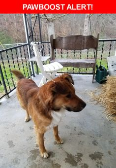Is this your lost pet? Found in Hustonville, KY 40437. Please spread the word so we can find the owner!    Nearest Address: Hwy 78, Hustonville, KY, United States