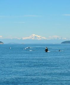 Orcas Island, WA.  Whale watching  offthe coast in August 2011.