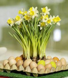 daffodils decor 2