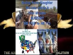 HELP STOP HORSE SLAUGHTER! Be the Horses Voices and be heard.. POWERFUL VIDEO!