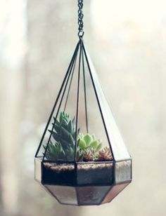 10-diy-terrariums10