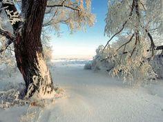 Cubierto de nieve