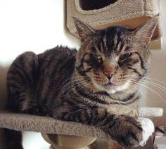 夕方ムサシさん背毛を立てて遊んでたら怒られたbe displeased. #musashi #mck #cat #キジトラ #ムサシさん by _daisy