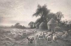 Scotland Landscape Sheep
