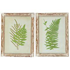 framed fern prints   Piece Verdant Fern Framed Print Set - Lone Elm Studios on Joss ...