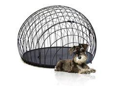 I think I want the dog....