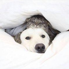 "spilltojill-pets-dogs-cats: "" by ohmydogmag "" Animals And Pets, Baby Animals, Funny Animals, Cute Animals, Pet Dogs, Dogs And Puppies, Dog Cat, Doggies, Tier Fotos"