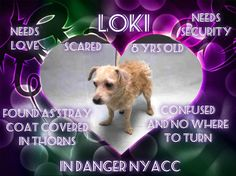 LOKI – A1094628 Very sweet dog on death list today! If you would like to foster or adopt and can't make it to the shelter, please write an email NOW to the Urgent Help Desk at Helpdogs@Urgentpodr.org Their experienced volunteers will assist you one-on-one with rescues and the application process. Transport can be arranged by rescues to the homes of approved fosters or adopters within 3-4 hours of New York City