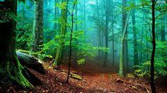 Forest Desktop Wallpaper HD Computer.