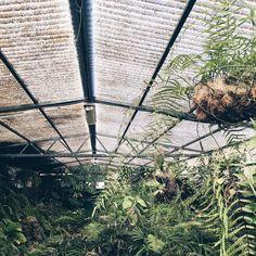 On the blog today: the stunning botanical garden of gran canaria  #apdmingrancanaria  link in bio