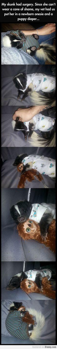 Skunk in a onesie whateven this is so cute - @nureesha