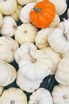 White pumpkins - Okl