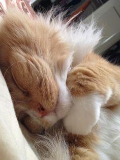 orange kitty cat.