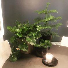 Viherkasvien hoitopäivä   #viherkasvi #greendecor #greenhome #plants #sisustus #vihersisustus #grönaväxter #greeninterior #interiors #interior #inredningsdesign #myhome #home #homeinterior #homedecor #instahome #homeinspo #instainterior