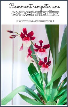 How to repot an orchid? Choice of compost, root maintenance . Unique Wedding Centerpieces, Orchid Centerpieces, Diy Wedding Flowers, Indoor Orchids, Orchids Garden, Types Of Orchids, Blue Orchids, All Flowers, Pretty Flowers