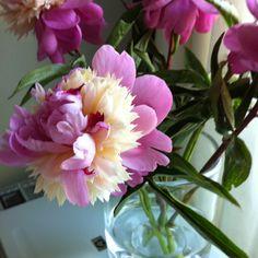 Flowers in the office Glass Vase, Garden, Flowers, Plants, Home Decor, Garten, Decoration Home, Room Decor, Lawn And Garden