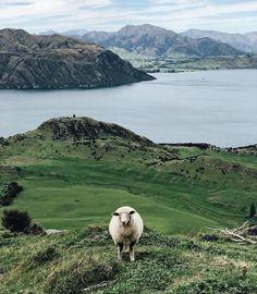 Zápisky z Nového Zélandu
