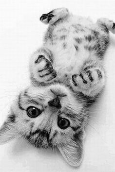 Kitty laying on his back.