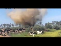 Close Call With Airstrike - For Cows. Syria War 2015. Near miss in Syria as a couple of cows had a close call with an airstrike. We might be able to get milkshakes out of them now. Military Videos, Military News, Milkshakes, Syria, Armed Forces, Cows, War, Couple, Special Forces