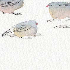 Theodore Key Illustration. Watercolour birds. Pen and Ink. Bockingford paper. @level_shelving