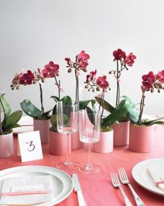 Image result for martha stewart orchid