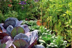 Ako pripraviť rastlinné výluhy?