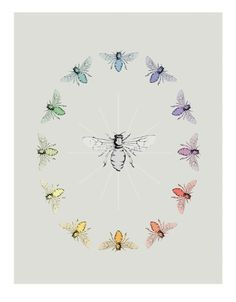 Color Bee Wheel by Little Bean Prints