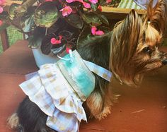 Country Cute Gingham Dog Dress Small