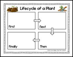 Life Cycle of a Plant FREEBIE from The Kinder Cupboard