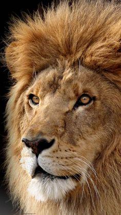Leão.