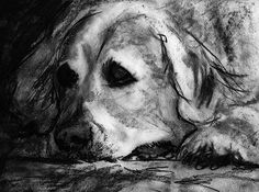 Golden retriever dog print, charcoal Golden retriever drawing, Goldie dog gift,…… visit oscarjetson.com to see cool dog art oscarjetson.com