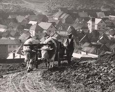 Slovakia,Martin Martinček: Volský záprah:1960 - 1966