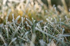 Check out Macro of winter grass by ChristianThür Photography on Creative Market
